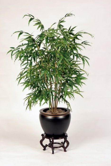 bamboopalm-468-x-702
