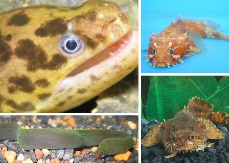 lionfish-eel1