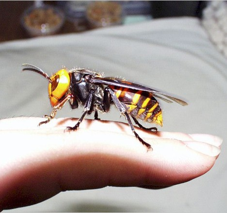 Buzz Killers: 10 Of The World's Biggest, Baddest Bugs