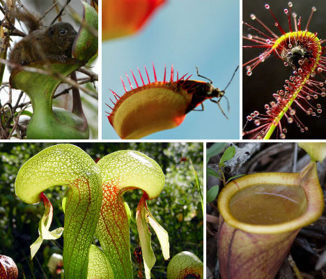 7 Carnivorous Wonders of the Plant World