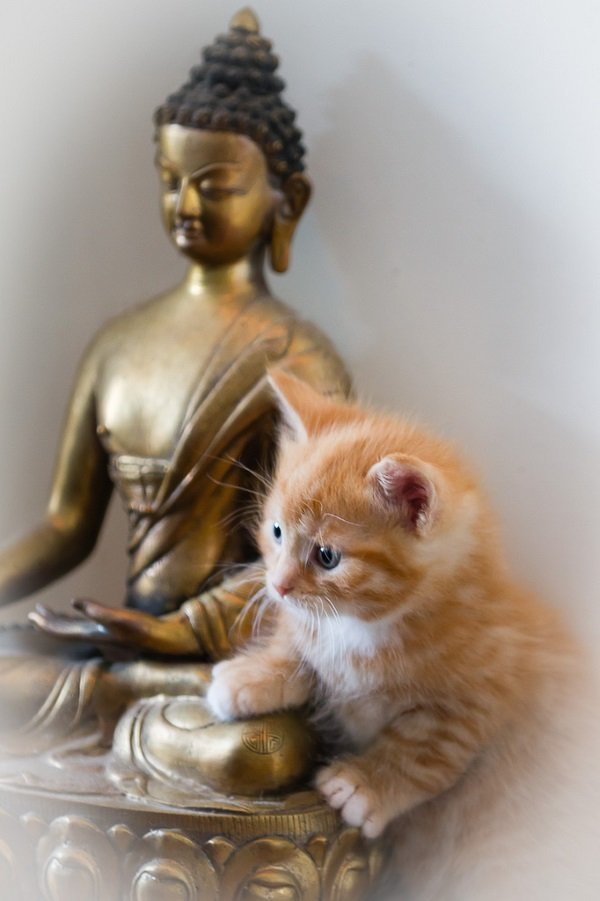 Neko Nirvana: Cat-Napping In The Lap Of Buddha