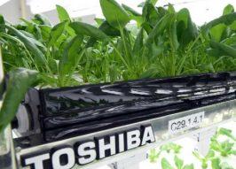 Electronics Plant Ditches Disks, Pitches Lettuce