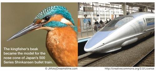 biomimicry kingfisher bullet train