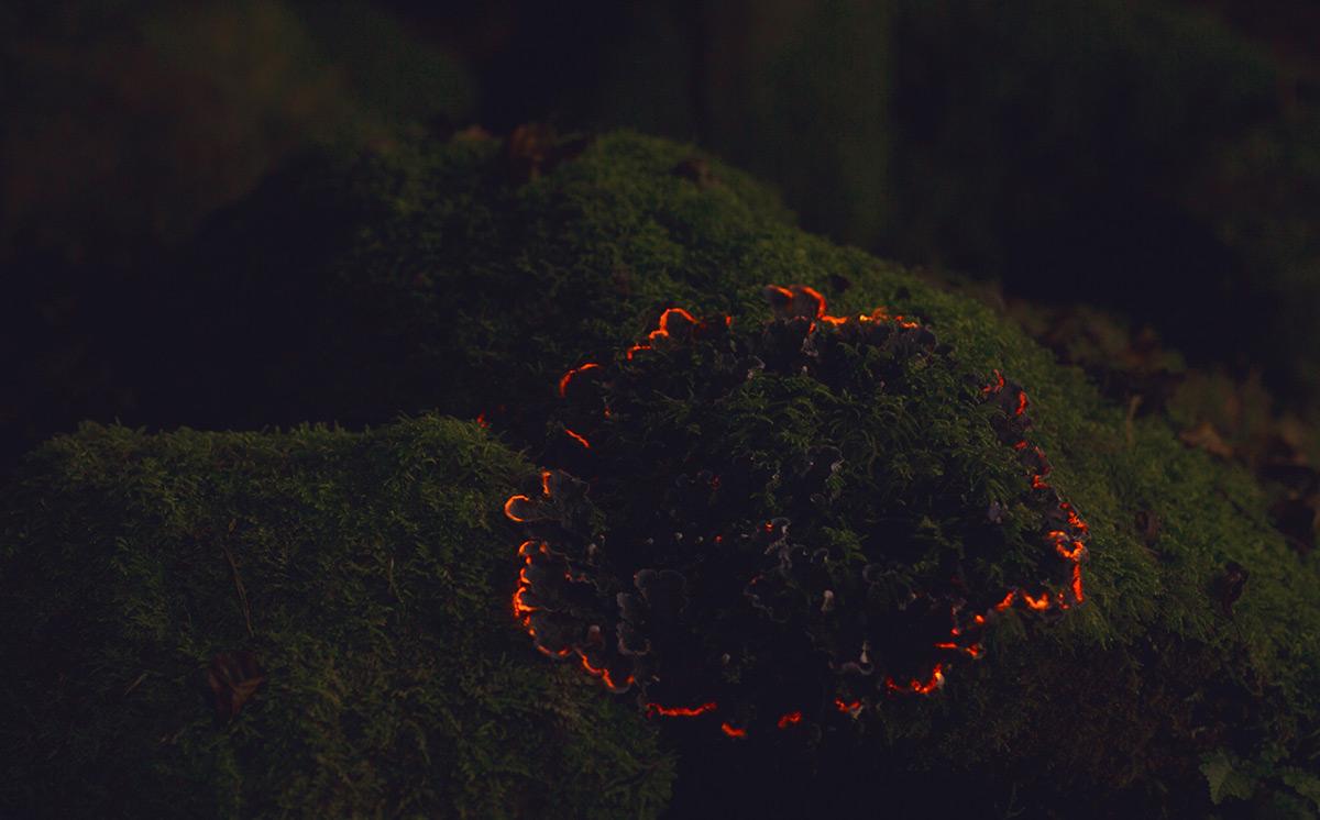 bio forest 5