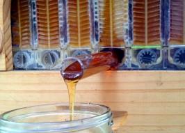 Flow Hive: New Beehive Design Puts Honey on Tap