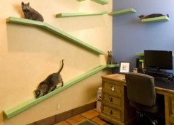 Home Sweet-Smelling Home: 14 Cats & Counting
