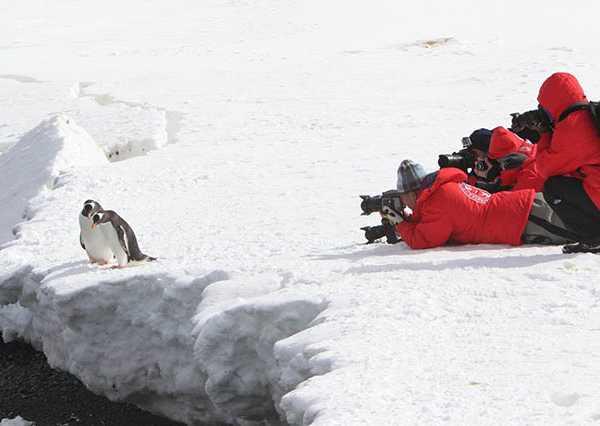 penguins-tourists4