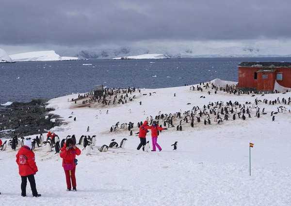 penguins-tourists5