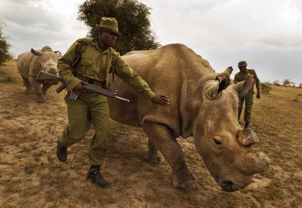 Last White Rhino 9