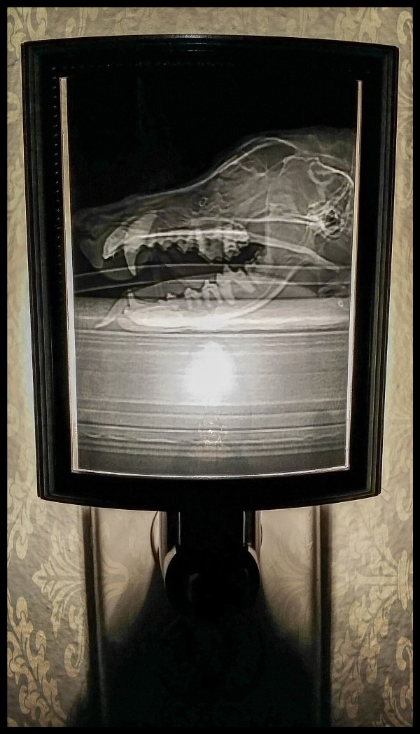 Animal X-Ray Lampshades 1