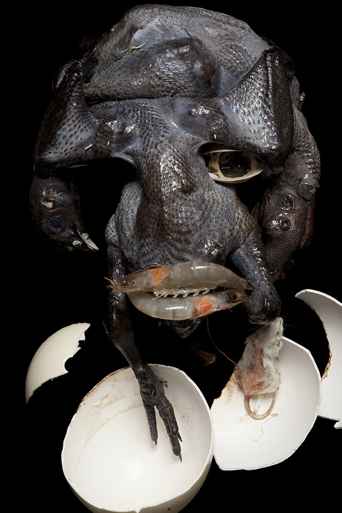 Sculptor crafts odd busts from organic refuse...