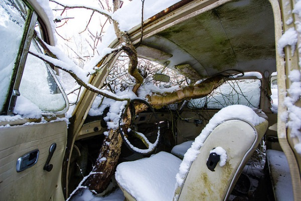 Trunk Driving: Tree-Colonized Abandoned Vehicles
