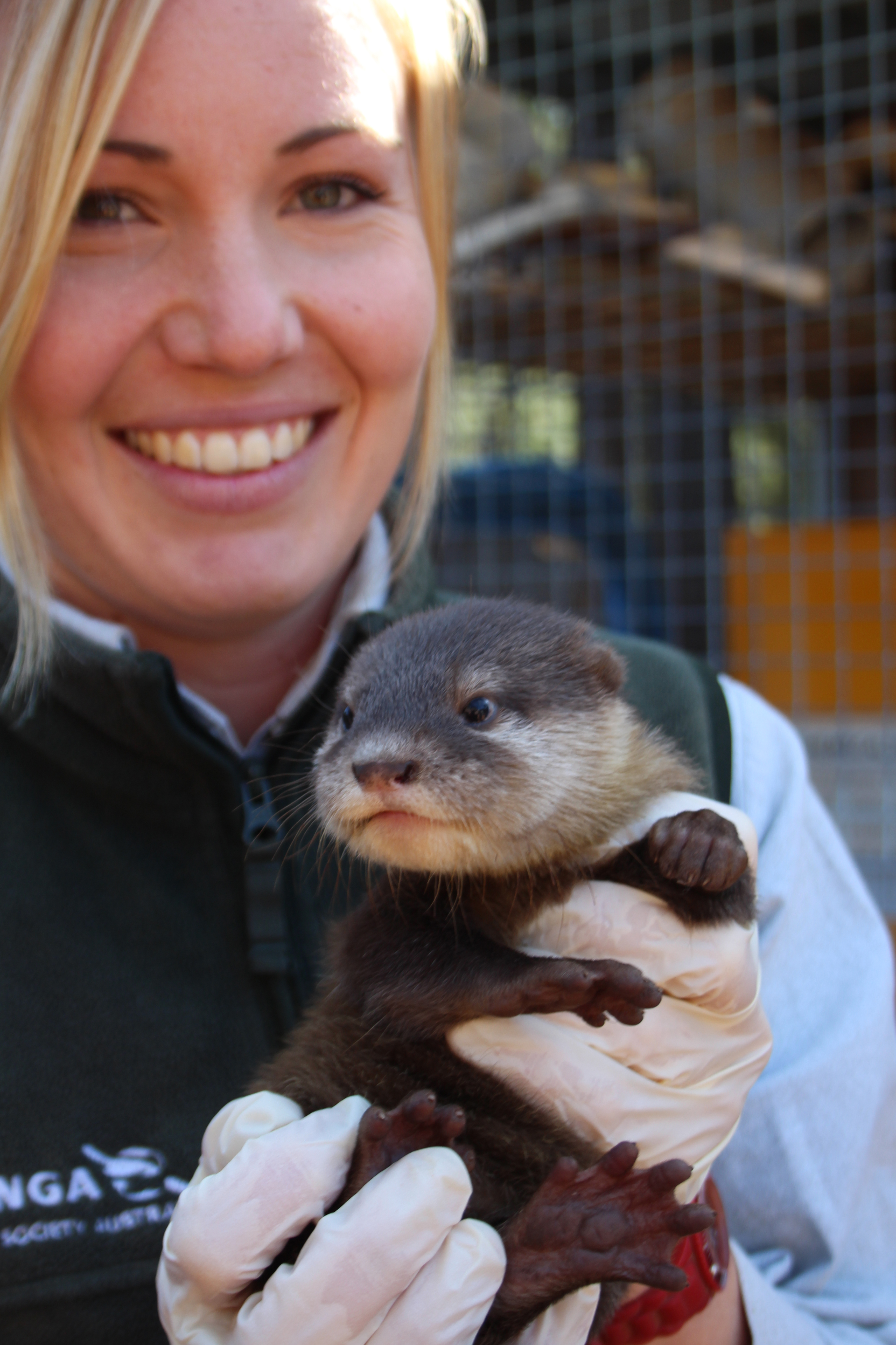 Zoo Welcomes Three Otter Pups
