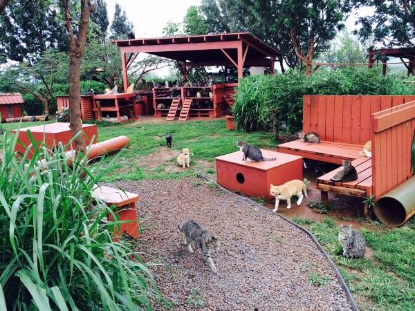 """""""Hawaiian Lions"""" Roam At Lanai Cat Sanctuary"""