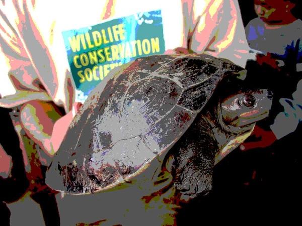 WCS-wildlife-fashionista-0