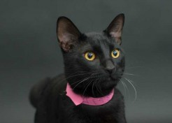 Black Cat Project Lets Overlooked Cats Shine