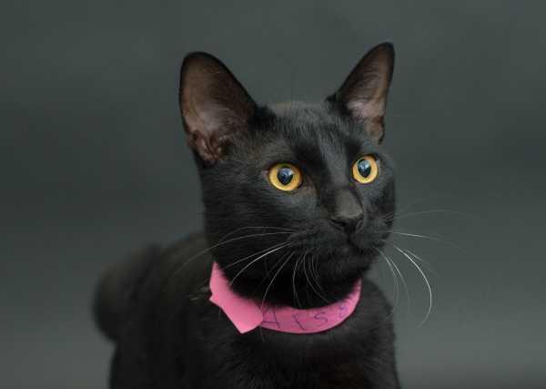 black-cat-project-2a