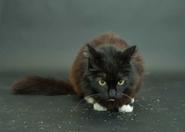 black-cat-project-3c