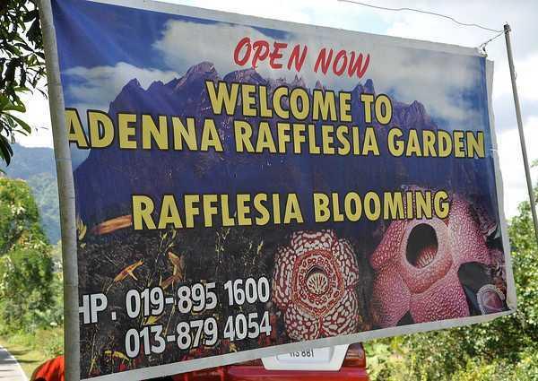 rafflesia-1