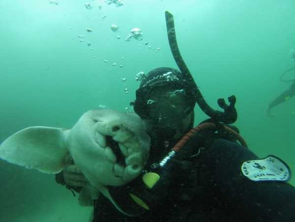 shark-diver-friendship-6