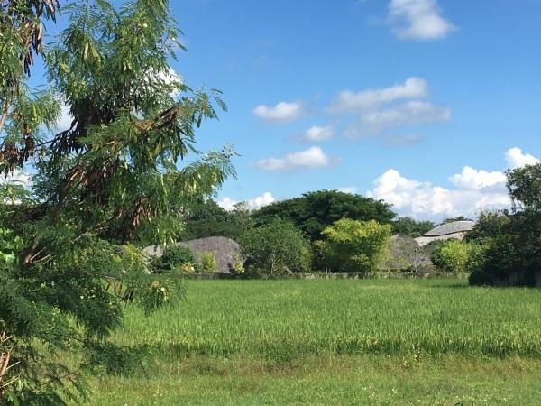 Panyaden-International-School-Sports-Hall-Bamboo-Architecture-40