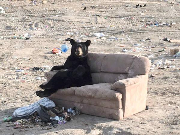 sofa-bear-5