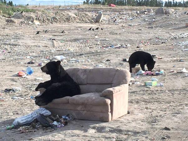sofa-bear-6