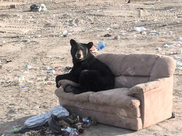 sofa-bear-7