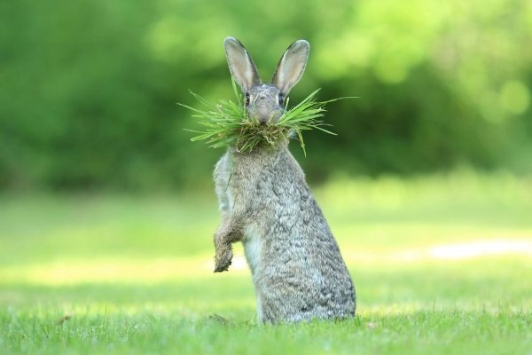 2017 Comedy Wildlife Photography Winners