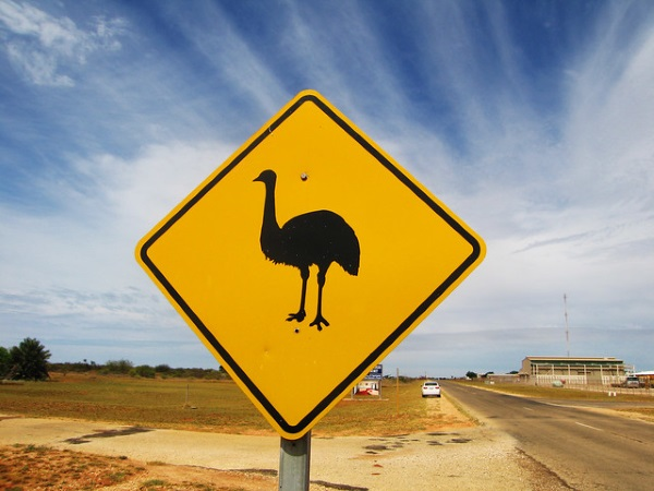 Koalified: 7 Amazing Australian Animal Crossing Signs