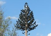 Fronds With Benefits: 10 Artificial Cellular Tower Trees
